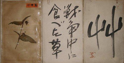 画像1: 戦時中に食べた草 (1)